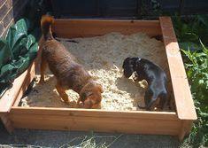 Diary of a Dog Walker: The Sandpit has Arrived! Diary of a Dog Walker: The Sandpit has Arrived! Dog Friendly Backyard, Dog Backyard, Backyard Ideas, Digging Dogs, Dog Enrichment, Dog Playground, Dog Toilet, Dog Garden, Dog Potty