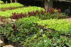 """Conheci o site DAHORTApor acaso, ao pesquisar cursos de jardinagem no google. Me chamou a atenção quando li """"se você mora em Belo Horizonte, pode receber os alimentos da nossa horta em casa"""" – até então nunca tinha visto algum [...]"""