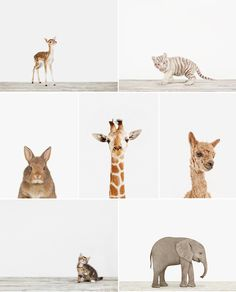 Nursery Prints // Animal Print Shop - Urbanwalls Blog