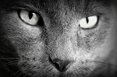 Onze mooie kat Bill