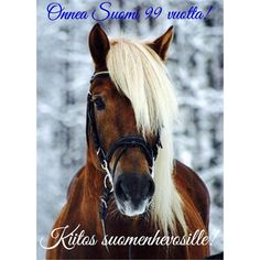 Chocolate Palomino Horse- Love the blonde hair! All The Pretty Horses, Beautiful Horses, Animals Beautiful, Horse Pictures, Animal Pictures, Animals And Pets, Cute Animals, Farm Animals, Majestic Horse