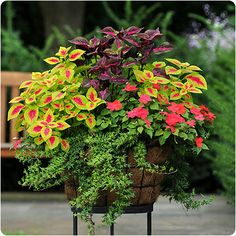 perfect shade container...coleus, impatiens and ivy. Front Porch pot.