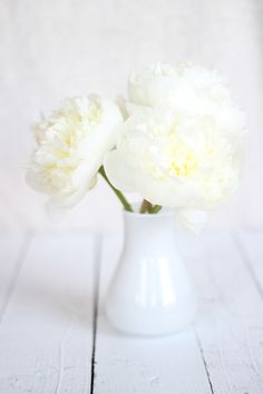 Simple Winter White Peonies