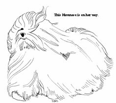 havanese coloring pages Google Search havana silk Pinterest