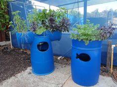 Barrel Aquaponic Systems - Backyard Aquaponics - great site with free instructions!