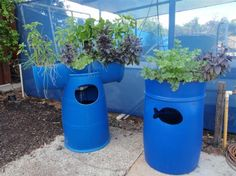 Barrel Aquaponic Systems - Backyard Aquaponics - great site with free instructions!