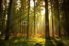 Zdjęcia na płótnie, fototapety na wymiar, obrazy na ścianę : Beautiful Forest