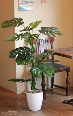 光触媒 光の楽園 モンステラ 【インテリアグリーン フロアタイプ 人工観葉植物 】高さ1.2m