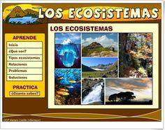 """""""Los ecosistemas"""" es una aplicación, del Colegio Mariano Castillo de Villamayor (Zaragoza), en la que se expone la teoría sobre el tema y se prueba su conocimiento mediante actividades interactivas."""