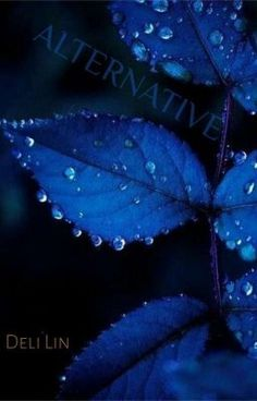 The color of these leaves is a beautiful royal blue color. The light hitting it makes it have different values of royal blue. The hue is greater where the light hits the leaves. Image Bleu, Everything Is Blue, Fotografia Macro, Blue Leaves, Blue Wallpapers, Phone Wallpapers, Desktop Backgrounds, Pretty Wallpapers, Indigo Blue