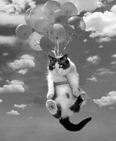 Oh my me!  Cat + balloon.  It could only be better if it were purple.