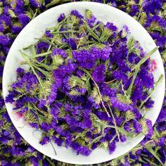 Dried Myosotis Sylvatica Flower Herbal Tea--Forget-Me-Not Flower Herbs Tea H5 #shoes, #jewelry, #women, #men, #hats