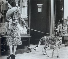 Pet cheetah? I value my life too much, haha.