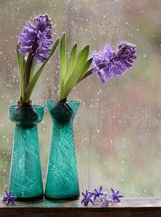 Houseplants That Filter the Air We Breathe Emerald Vintage Hyacinth Vases. Page About Indoor Gardening With Bulbs: Hyacinth Flowers, Bulb Flowers, Flower Pots, Arrangements Ikebana, Flower Arrangements, Bouquet, Spring Bulbs, Flower Wallpaper, Water Garden