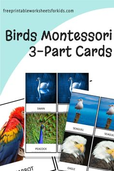 Looking for a bird theme activity? Set up this free printable as proper 3 part cards for a spring literacy activity or as a preschool science center to help your students learn the names of different birds. #3partcards #birdtheme #springliteracyactivity #preschoolsciencecenter #freeprintableworksheetsforkids