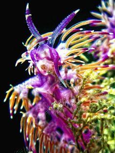 Underwater world - Onder water wereld Life Under The Sea, Under The Ocean, Underwater Creatures, Underwater Life, Underwater Photos, Deep Sea Creatures, Sea Snail, Sea Dweller, Sea Slug