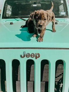 Gorgeous puppy and nice Jeep.💗 If I had to choose between both of them I would have the puppy of course. I've already got a Jeep and Land Rover. Cute Baby Animals, Animals And Pets, Funny Animals, Blueline Pitbull, Cute Puppies, Dogs And Puppies, Doggies, Tier Fotos, Cute Cars