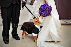 four legged ring bearer in a doggie tuxedo purple flowers bridal bouquet dog in the wedding party puppy love cute bride and groom with pet