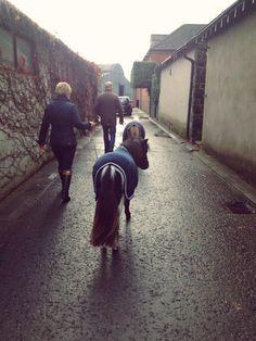 Mini models en route  #horseware #behindthescenes #aw2015