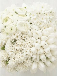 white blooms stunning whites