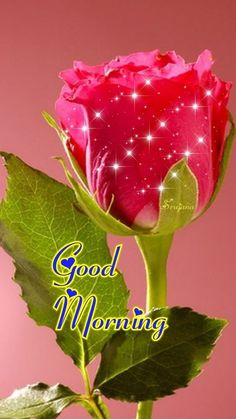 Morning Msg Morning Qoutes Morning Love Good Morning Coffee Morning Greetings Quotes Good Morning Images Night Quotes Good Day Wishes Good Morning Flowers May God bless you and your family, Enjoy this day for it was given to us as a gift From the - Salvab Good Morning Beautiful Pictures, Good Morning Images Flowers, Good Morning Roses, Good Morning Sister, Good Morning Image Quotes, Good Morning Msg, Good Morning Cards, Good Morning Friday, Good Morning Inspirational Quotes