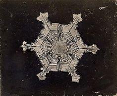 Snow Crystal~Wilson Alwyn Bentley, 1910