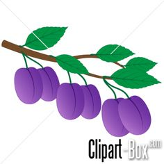 CLIPART PLUMS BRANCH