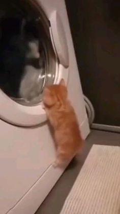 Cute Baby Cats, Cute Little Animals, Cute Cats And Kittens, Cute Funny Animals, Kittens Cutest, Funny Cats, Cute Babies, Cute Animal Videos, Funny Animal Pictures