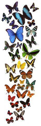 Rainbow of Butterflies Artist: David Belda