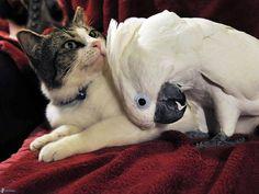Unusual Animal Friendship