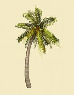 Tropical coconut palm tree illustration premium image by Coconut Tree Drawing, Palm Tree Drawing, Palm Tree Vector, Coconut Palm Tree, Palm Trees Beach, Cool Tree Houses, Celtic Tree Of Life, Tree Illustration, Tree Wallpaper