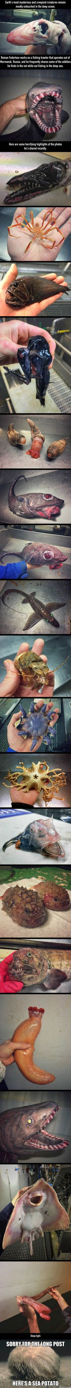 Russian Deep-Sea Fisherman's Discoveries Will Fuel Your Nightmares (By Roman Fedortsov ) - 9GAG