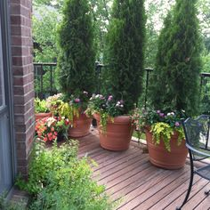 Summer Planters - could be permanent features on our deck to help with privacy