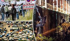 REVEALED: Record number of migrants now trying to get to UK from violence-ravaged Calais  THE number of migrants living in the Calais Jungle camp has reached a record high - up over 50 per cent on previous figures - official statistics have revealed.  By SOFIA DELGADO PUBLISHED: 13:01, Sat, Aug 20, 2016