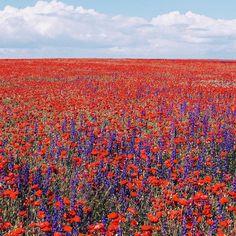 Campo de flores bellisimo