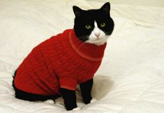 109 Cats In Sweaters (scheduled via http://www.tailwindapp.com?ref=scheduled_pin&post=185561)