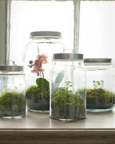 Woodland Terrarium | Step-by-Step | DIY Craft How To's and Instructions| Martha Stewart