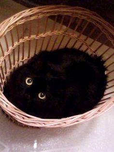 Black cat in a basket.