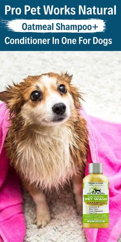 $15.99·Our Oatmeal Dog Shampoo And Conditioner is recommended by Vets and Specially formulated for pets with allergies to food, grass and flea bites. #dogoatmealshampoo #dogshampoo #dogconditioner #dogconditionerdiy #dogbathingshampoo #dogbathing Oatmeal Shampoo, Cat Shampoo, Shampoo And Conditioner, Dog Smells, Natural Vitamin E, Flea Treatment, Antioxidant Vitamins, Dog Eyes, Allergies
