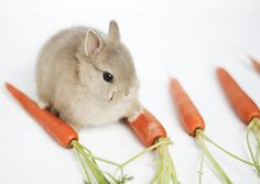 bunny & carrots {a perfect pair}