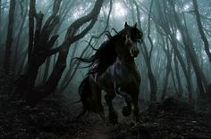Beautiful Wallpapers: Black Horse Wallpapers