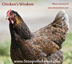 Shaman Chicken's Wisdom
