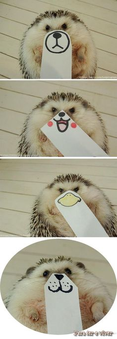 Funny pictures about The Many Faces Of a Hedgehog. Oh, and cool pics about The Many Faces Of a Hedgehog. Also, The Many Faces Of a Hedgehog photos. Animals And Pets, Baby Animals, Funny Animals, Cute Animals, Beautiful Creatures, Animals Beautiful, Animal Pictures, Funny Pictures, Cute Hedgehog