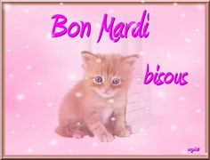 Bon Weekend, Bon Mardi, Messages, Cats, Week End, Movie Posters, Tuesday, Thinking About You, Days Of Week