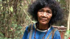 Suku Asli: Nasib Orang Rimba di Hutan Sumatra