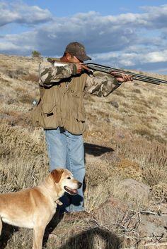 Dogs dig fall in Reno Tahoe