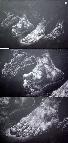 drawing with chalk on black paper / Завьякова Н. drawing with chalk on black paper / Завьякова Н. Anatomy Sketches, Anatomy Art, Anatomy Drawing, Drawing Sketches, Art Drawings, Foot Anatomy, Chalk Drawings, Drawing Tips, Feet Drawing