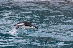 Photo Essay : Elephant Island, Antarctica:  Gary from Everything Everywhere has some wonderful photos of Anarctica.
