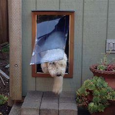 Diy Dog Doors this diy dual flap dog door keeps the weather out | doors, dog and