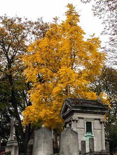 Couleurs d'automne dans le cimetière du Père Lachaise #Paris http://www.pariscotejardin.fr/2016/11/couleurs-d-automne-dans-le-cimetiere-du-pere-lachaise/